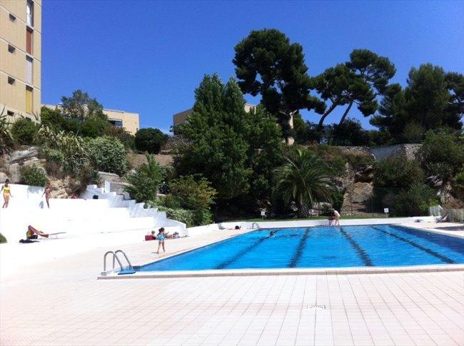 Colocation la penne sur huveaune loue 4 chambres for Algues brunes piscine