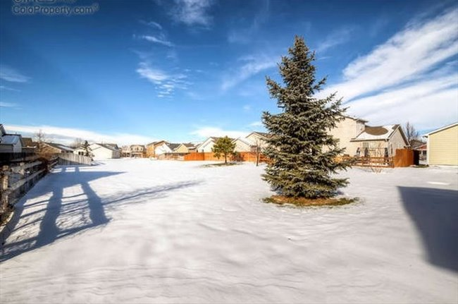 Room for rent in Fort Collins - Great House with Room Available - Image 3