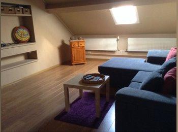 EasyKot EK - Groot Kot met eigen keuken, salon slaapruimte en groot terras , Mechelen-Malines - € 375 p.m.