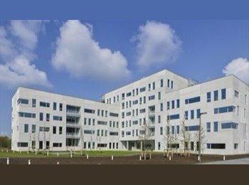 EasyKot EK - Splinternieuwe studentenflat te huur op het Zuid, Antwerpen-Anvers - € 365 p.m.