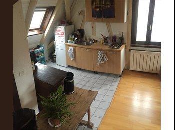 Appartager FR - charmant appart à partager proche strasbourg - Schiltigheim, Strasbourg - 390 € /Mois