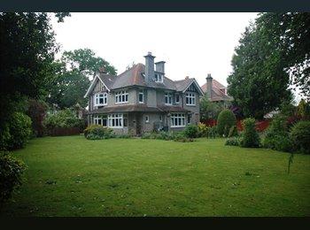 EasyRoommate UK - Talbot Woods: Executive dble furnished room - Talbot Woods, Bournemouth - £675 pcm