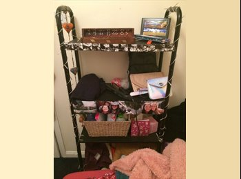 EasyRoommate UK - Single Room available ASAP  - Brighton, Brighton and Hove - £455 pcm