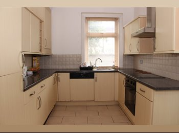 Well Presented Single Room to Rent