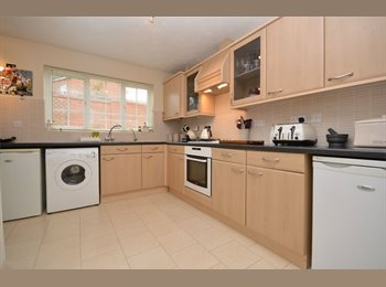 EasyRoommate UK - Student Rooms - Newly refurbished - Fortnightly Cleaner , Norwich - £475 pcm