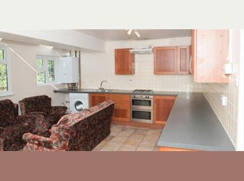 Large double top floor room in friendly student house