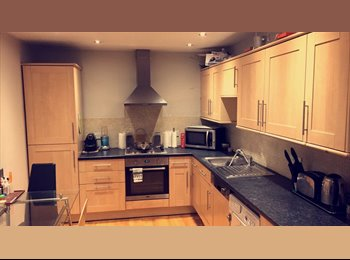 looking for a professional male flat mate