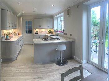 Single room in tidy house. Nice area, Hampton Hill