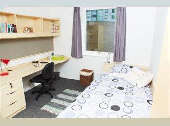 EasyRoommate UK - Single room 110pw all inclusive, Beaworthy - £440 pcm