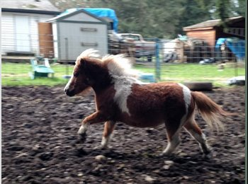 Room available - Must love animals! Horse possible