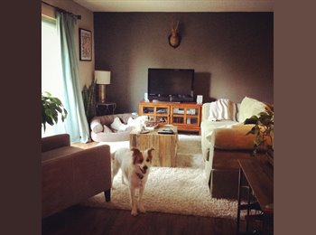 Great Complex, Sweet Dog & Decorated Apartment