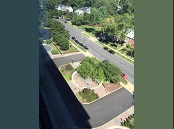 EasyRoommate US - High Rise Heaven Top floor Includes Gas, Water and Electric,  - Silver Spring, Other-Maryland - $1,675 /mo