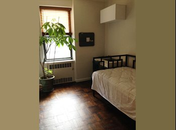 great room available for rent in forest hills