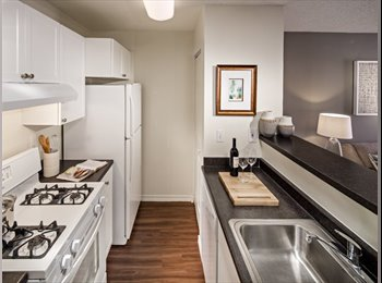 EasyRoommate US - Looking for Roommate to share 2Br/2Ba Apt - Downtown Stamford - Stamford, Stamford Area - $1,290 /mo