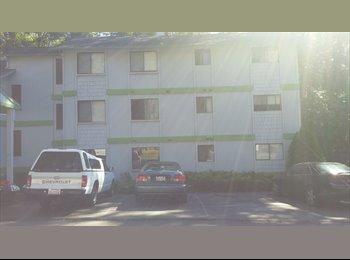 EasyRoommate US - Laid Back Kenmore Apartment, Kenmore - $450 /mo