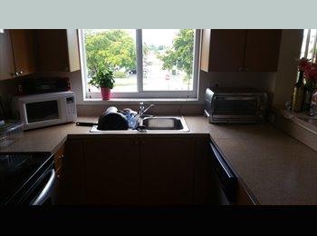 beautiful miami springs spacious apartment room rental