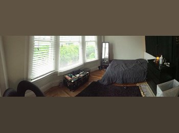 Room Available in Lower Nob Hill