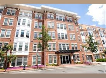 Diving Professional looking to share Awesome 2br/2ba Condo