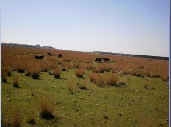CompartoDepto AR - Campo de 600 hectareas Saladas Corrientes - Corrientes Capital, Corrientes Capital - AR$18000