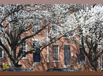 EasyRoommate US - Two bed-room is available - Sep 01, JHU, Baltimore - Central, Baltimore - $500