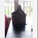 Appartager FR Cherchons nouveau coloc aimant les chats - Villejuif, Paris - Val-de-Marne, Paris - Ile De France - € 410 par Mois - Image 1