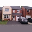 EasyRoommate UK DOUBLE ROOM TO RENT CLOSE TO WOLLATON PARK - Wollaton, Nottingham - £ 399 per Month - Image 1