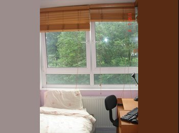 Single Room to Let in W2