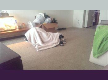 EasyRoommate US - need roommate before February 1st - Virginia Beach, Virginia Beach - $500