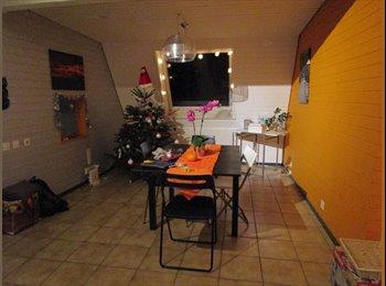 1/2 appartement collocation