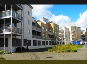 EasyRoommate UK - Amazing flat in Maidstone town centre next to train station looking for a fun tidy housemate ! - East Barming, Maidstone - £450