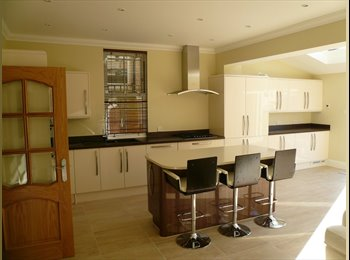 Professional looking for new house mate!