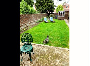 1 double in Semi Detached house with garden