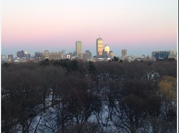 EasyRoommate US - Room available in 2bd/1.5bth at Dexter Park by BU! - Brighton, Boston - $1600