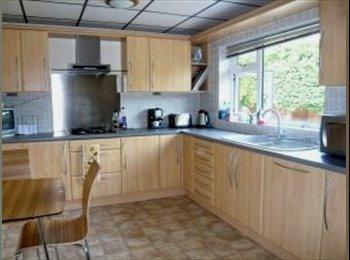 EasyRoommate UK - Brand new house share in Fareham - Fareham, Fareham and Gosport - £550 pcm