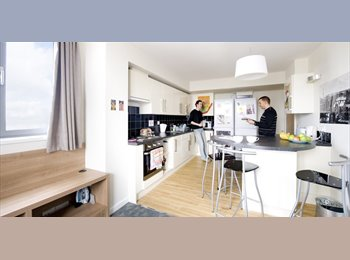1 bedroom, en-suite shower room, shared kitchen